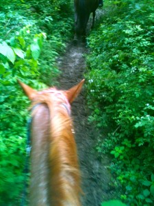 The beautiful view from my horse!